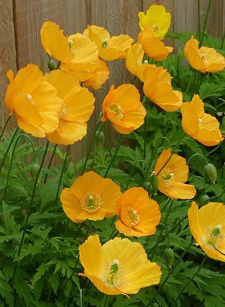 May garden 274.JPG
