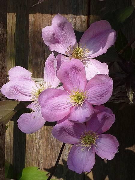 May garden 192.JPG