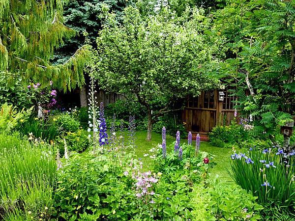 garden in the rain 302.JPG