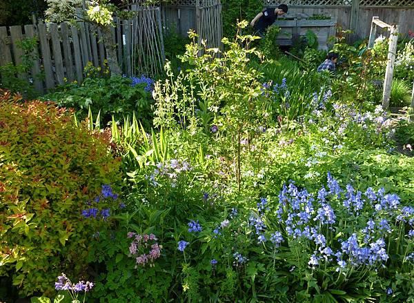 May garden 121.JPG