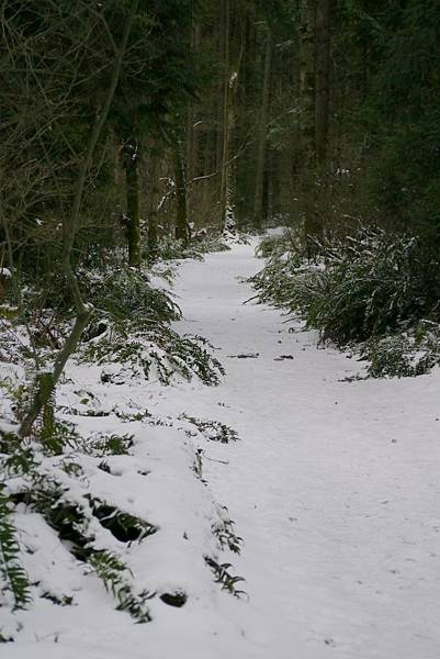 2012 一月雪 208.JPG