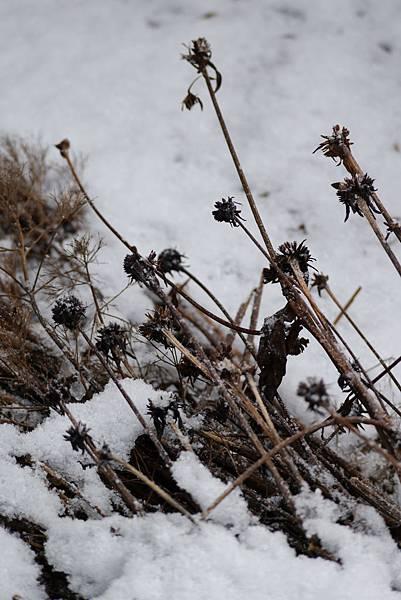 2012 一月雪 080.JPG