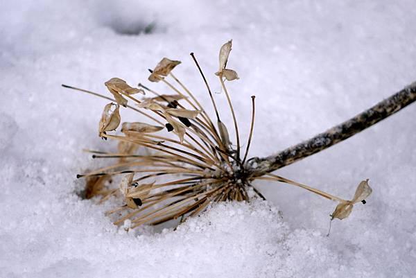2012 一月雪 075.JPG