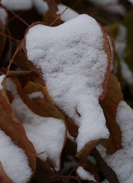 2012 一月雪 119.JPG