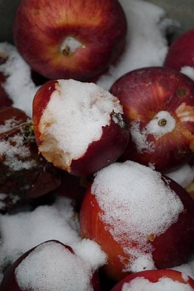 2012 一月雪 126.JPG