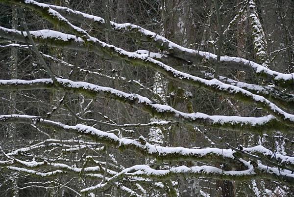 2012 一月雪 282.JPG