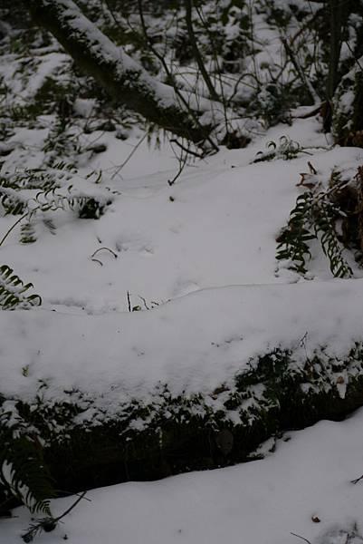 2012 一月雪 210.JPG
