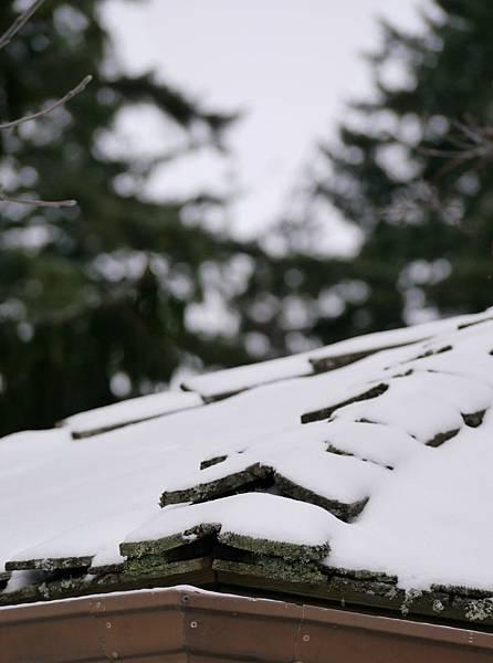 2012 一月雪 150.JPG