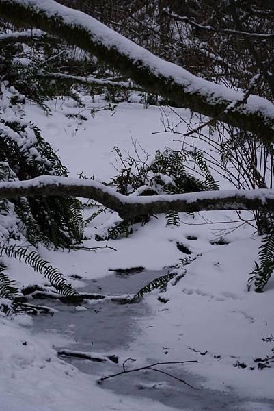2012 一月雪 279.JPG