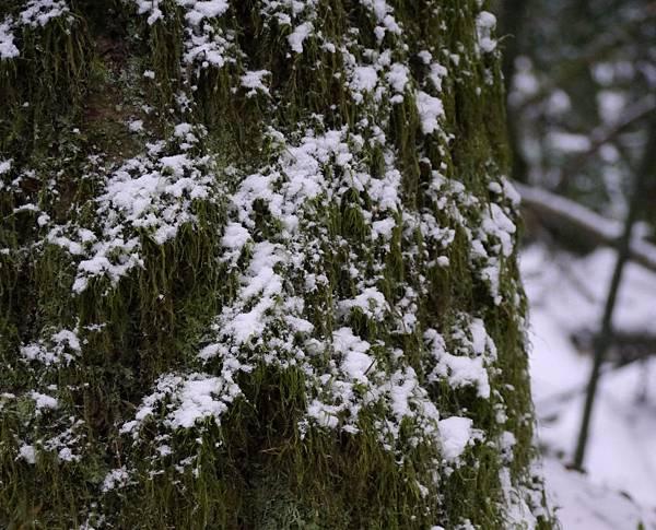 2012 一月雪 216.JPG
