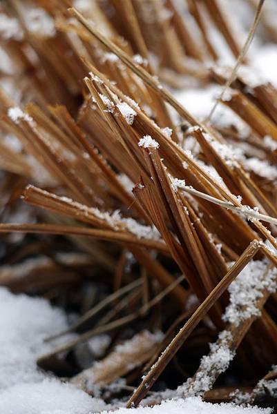 2012 一月雪 030.JPG