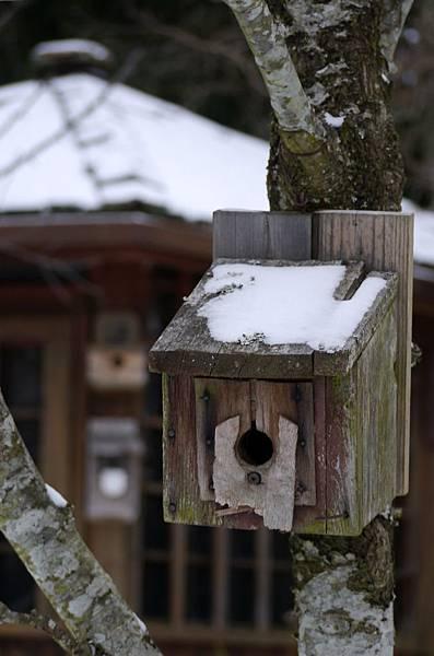 2012 一月雪 127.JPG