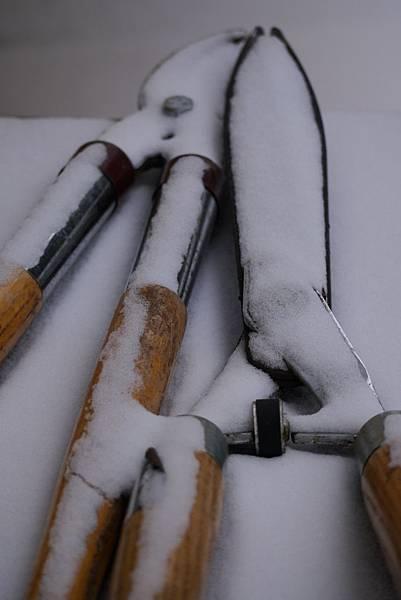 2012 一月雪 167.JPG