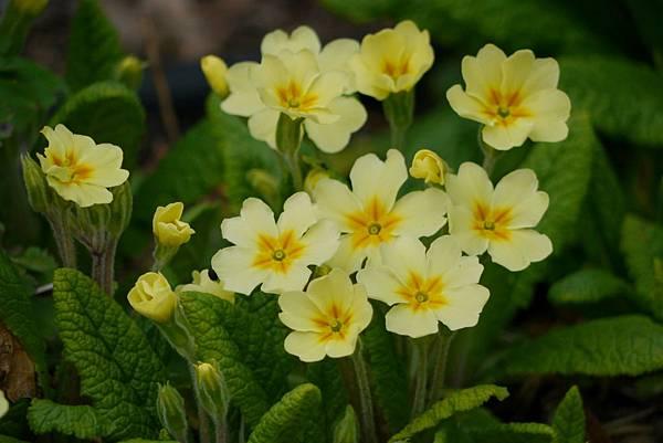 四月中的花2012 241