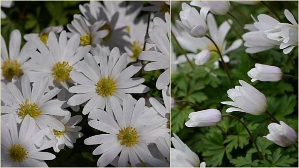 2012-04-12 四月中的花20121