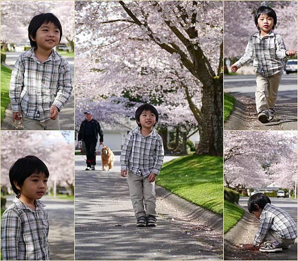 2012-04-15 四月吉野櫻