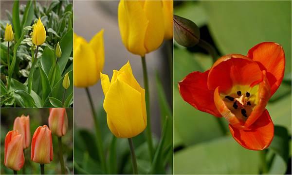 2012-04-24 四月的花1
