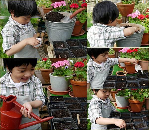 2012-04-26 四月育苗1