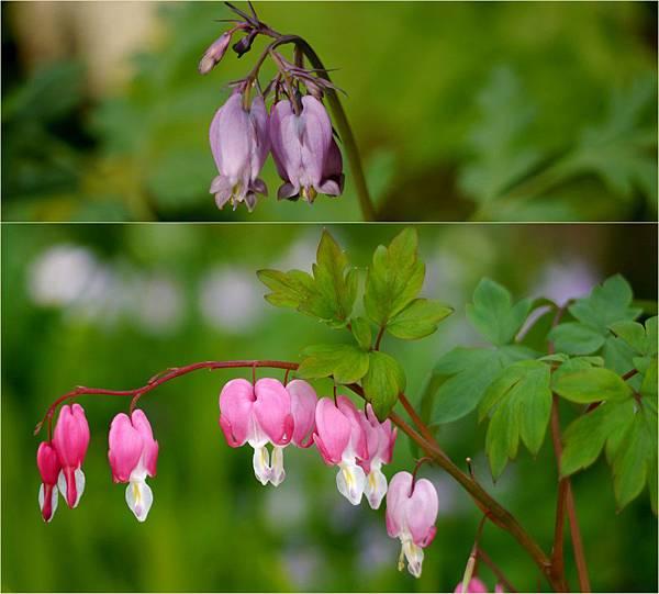 2012-04-27 四月底的花