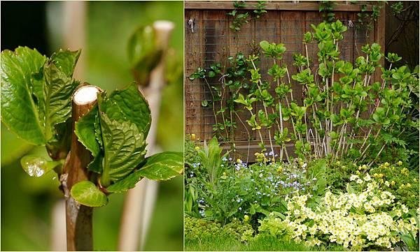 2012-04-28 四月底花園