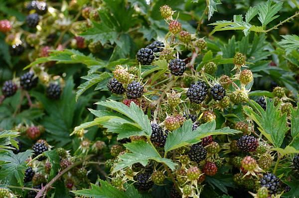 森林與野莓 125