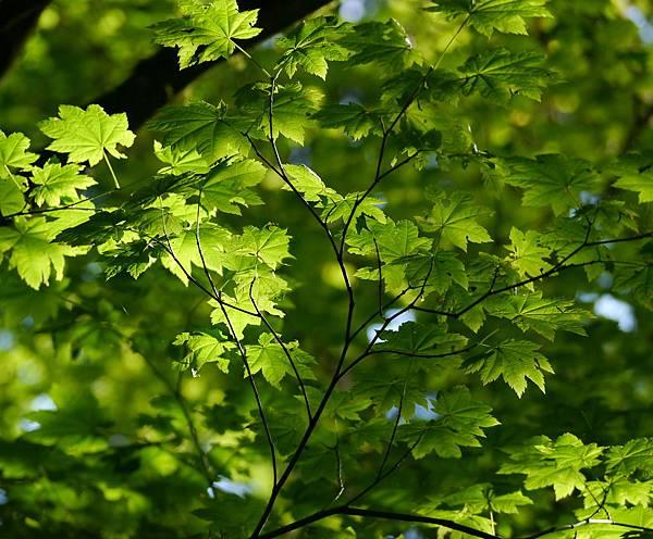 森林與野莓 050