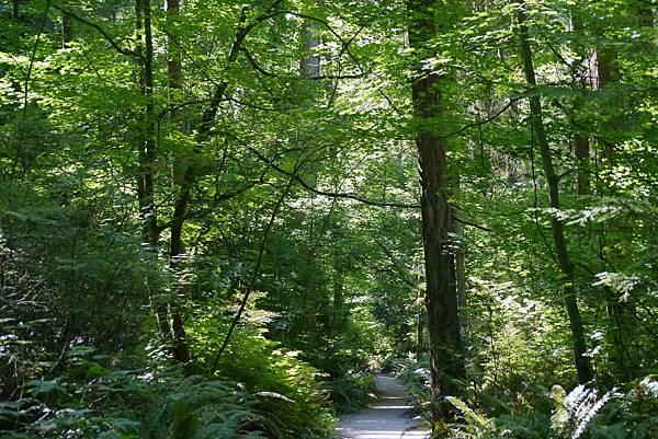 森林與野莓 142