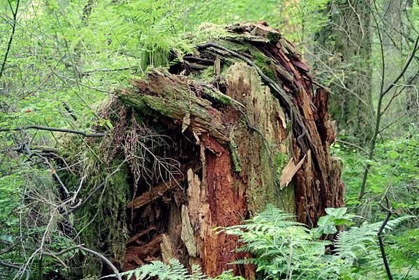 森林 028