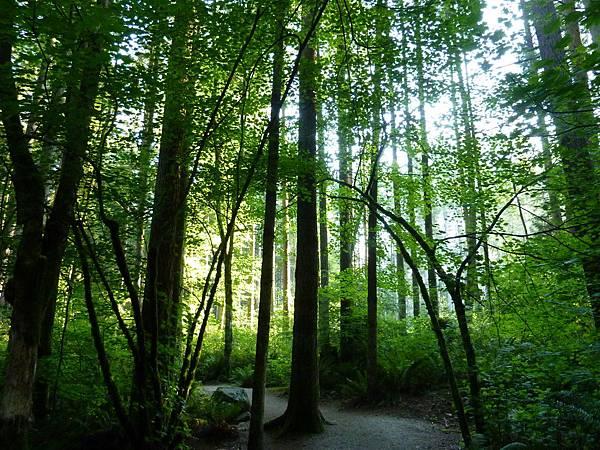 森林漫步與照燒雞排 002