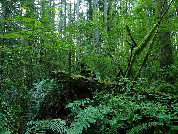 森林漫步 003