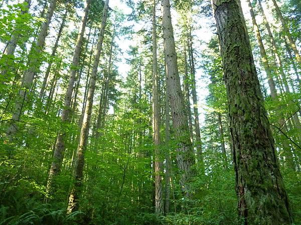 森林漫步070