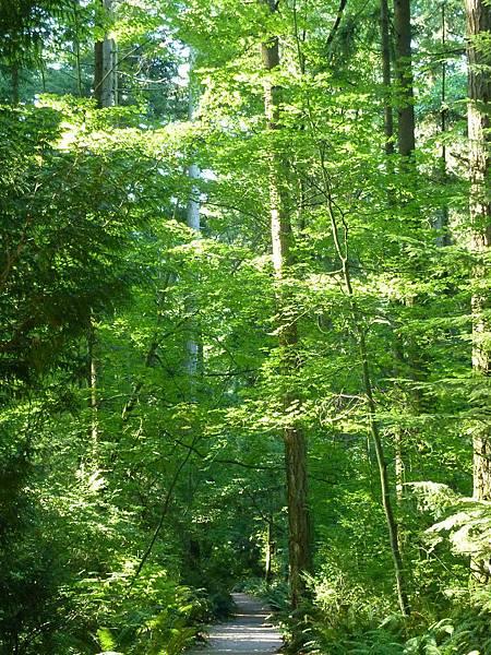 森林漫步 (2)