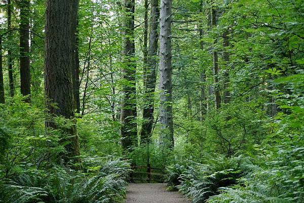 森林 018