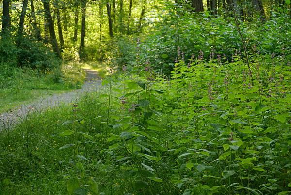 森林 033