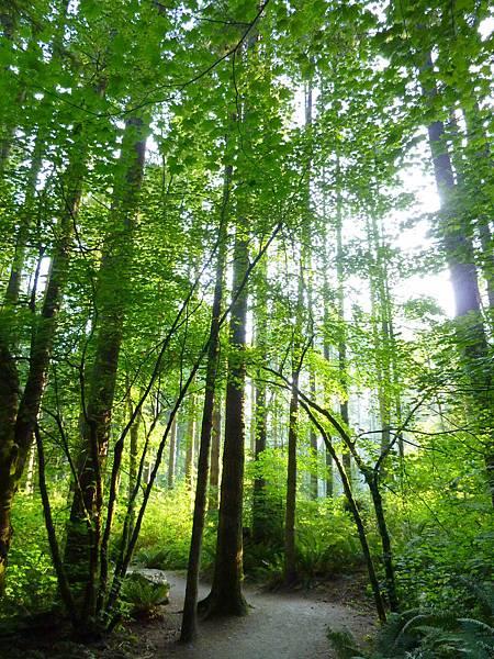 社區與森林漫步 033