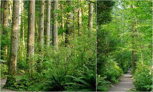 2012-07-07 森林