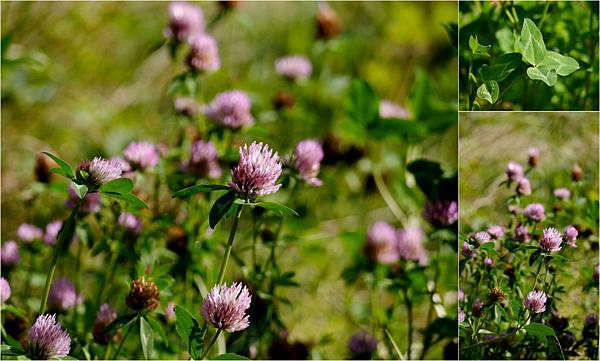 2012-08-26 森林與野莓