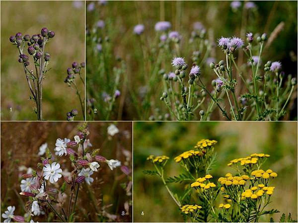 2012-08-26 森林與野莓1