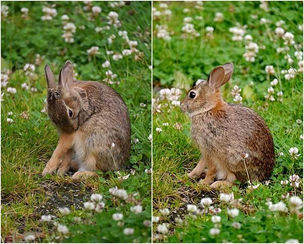 2012-07-05 野兔