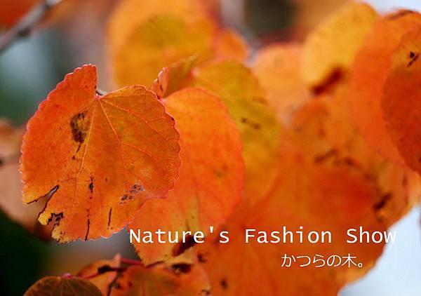 fall 061