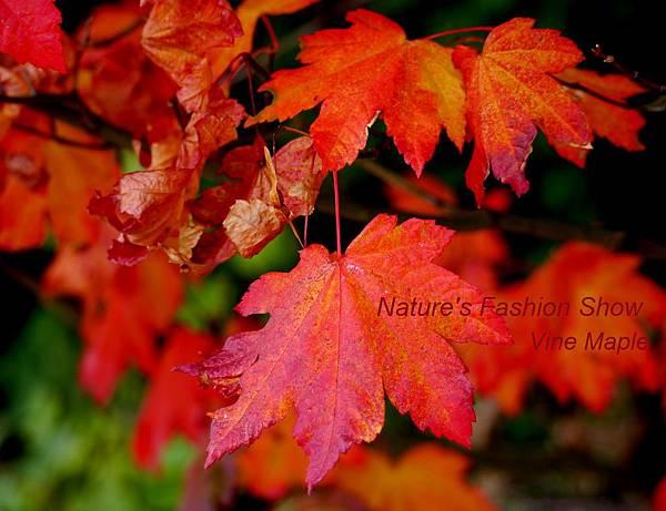 fall 078 - Copy