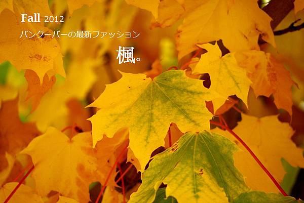 fall 037