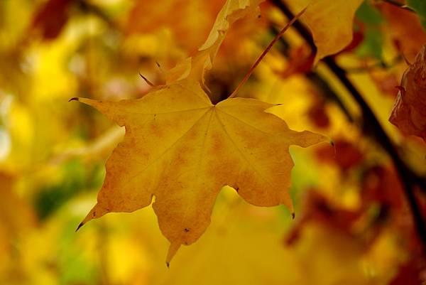 fall 028