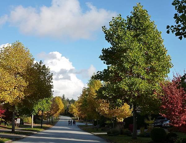 秋天的葉子 118