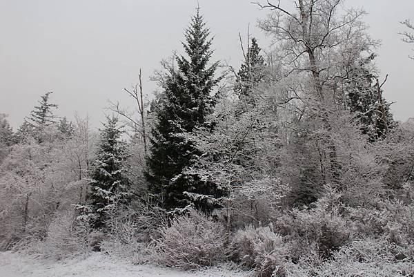 雪景2013 015