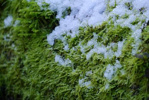 冬雪 047
