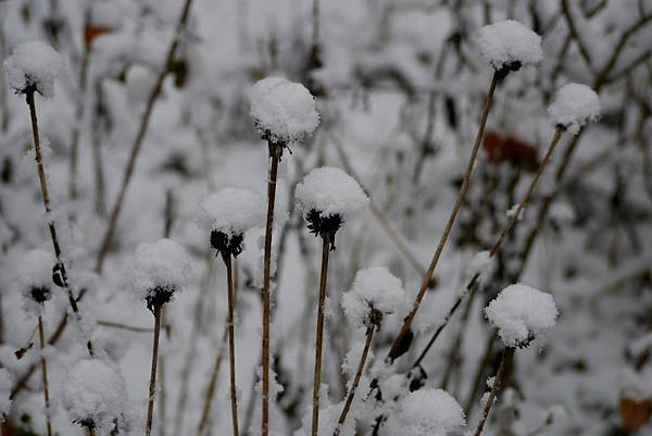 winter 2013 215