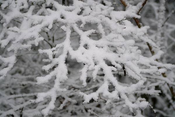 winter2013 253