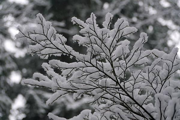 winter 2012~2013 259