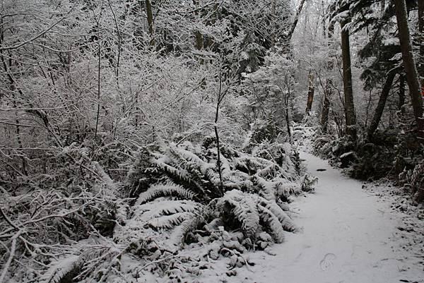 雪景2013 025